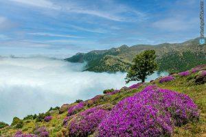 dfvshbidhfidufgibuweryfhruwfy7rwt743ryioejwhrij 300x200 طبیعت گردی در جنگل زیبای ابر